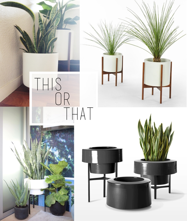 Modern Indoor Planters for Snake Plants